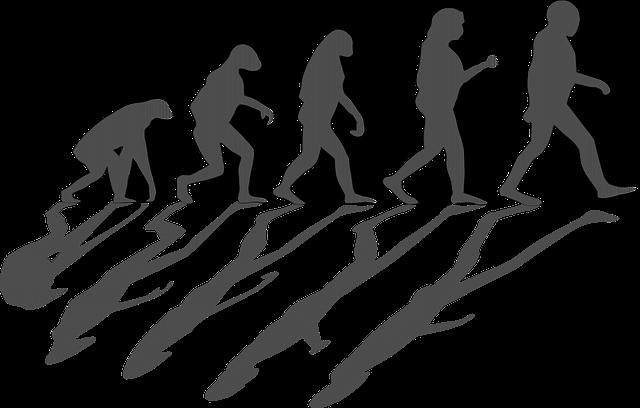 Evolución humana.  Imagen: vOpenClipart-Vectors. Fuente: Pixabay